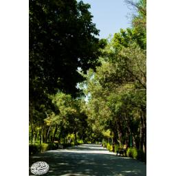تابلو عکس پارک شهر