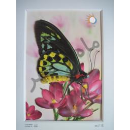 تابلو پروانه برجسته شماره 1007