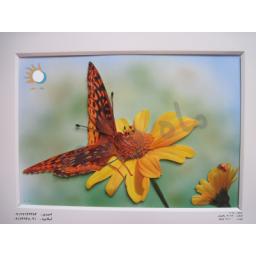 تابلو پروانه برجسته شماره 1012