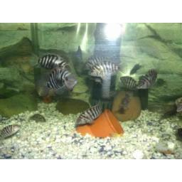 پرورش ماهیان زینتی