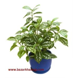 فروش گل و گیاه