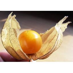 میوه ی فیسالیس