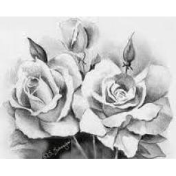 تابلوی گل رز- سیاه قلم (11)