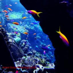 عکس های زیبا ماهى