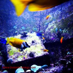 عکس های ماهی دریا