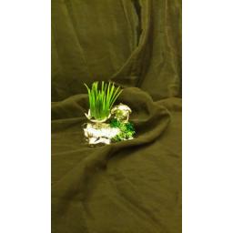 سبزه عيد