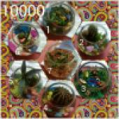 باغ شیشه ای یا تراریوم و کاکتوس