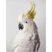 دنیای پرنده