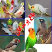 فروشگاه پرندگان زینتی باغ پرندگان